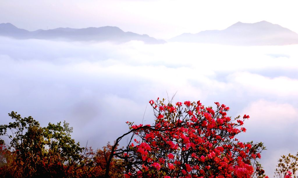 Photo taken on April 13, 2015 shows the scenery of cloud-shrouded Wuji Mountain in Huoshan County, east China's Anhui Province.