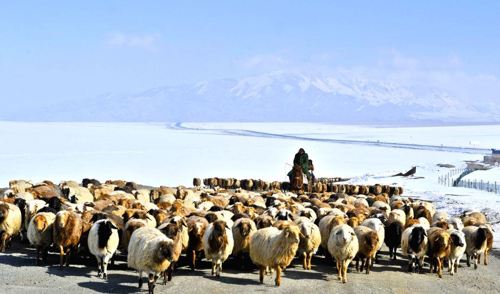 Herdsmen transfer their sheep to spring pastures in Ili Kazak Autonomous Prefecture, northwest China's Xinjiang Uygur Autonomous Region, March 9, 2017. Local herdsmen ...