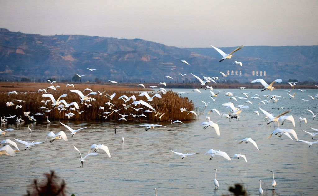 HEYANG, Dec. 5, 2019 - Photo taken on Dec. 5, 2019 shows birds flying over a wetland in Heyang County, northwest China's Shaanxi Province.