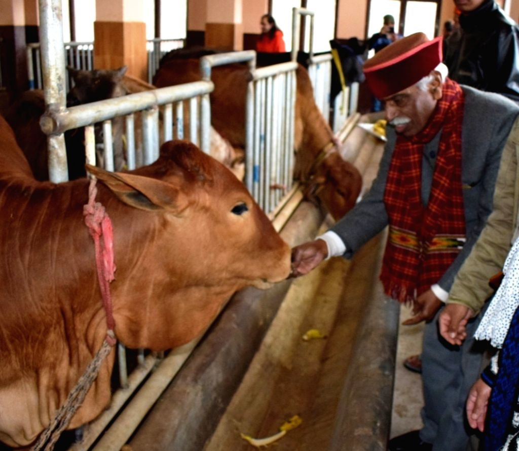 Himachal Pradesh Governor Bandaru Dattatraya during his visit to the Directorate of Mushroom Research at Chambaghat in Solan district on Jan 28, 2020.