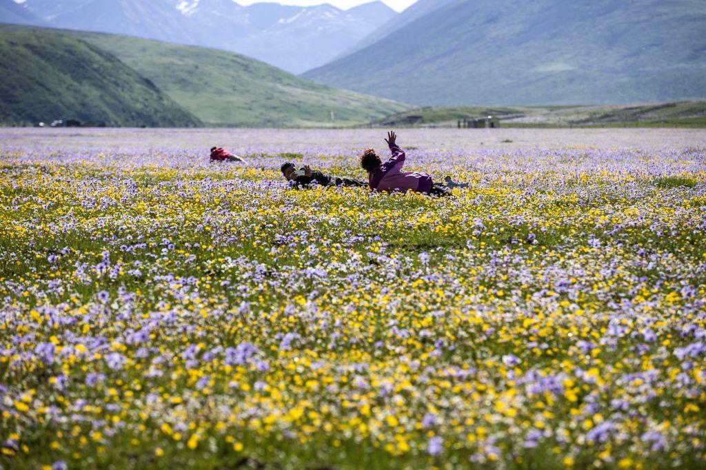 Tourists enjoy sunshine among flowers on the Emutang Pasture in Rangkou Township of Hongyuan County, southwest China's Sichuan Province, June 19, 2014. ...