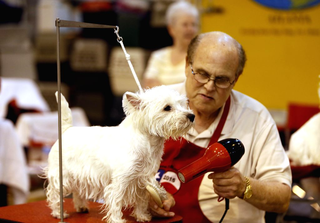 HOUSTON, July 18, 2019 - A man participates in the 42nd Annual Houston World Series of Dog Shows in Houston of Texas, the United States, on July 17, 2019. During the five-day run, the shows host ...
