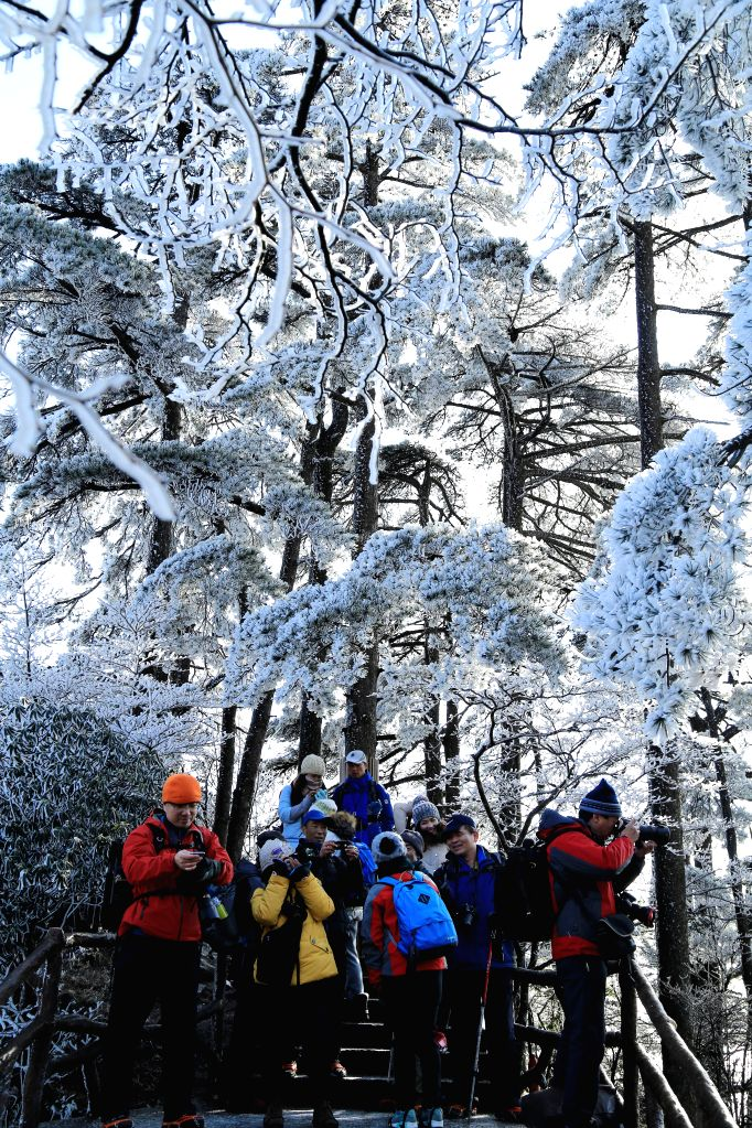 Tourists take photos of rimed trees on the Huangshan Mountain in east China's Anhui Province, Jan. 7, 2015.