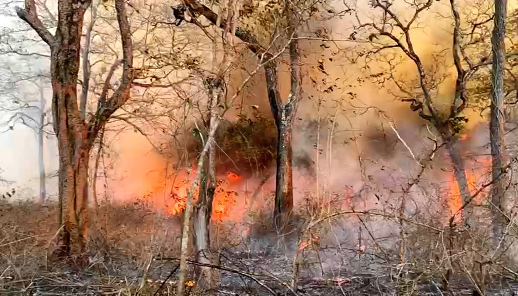 Huge fire broke out at  Nagarhole National Park also known as Rajiv Gandhi National Park in Mysore on Thursday 4th March 2021.