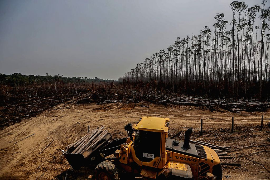 HUMAITA, Aug. 27, 2019 - Photo taken on Aug. 25, 2019 shows a destroyed eucalyptus plantation after fire in Humaita, the state of Amazonas, Brazil. BRAZIL OUT