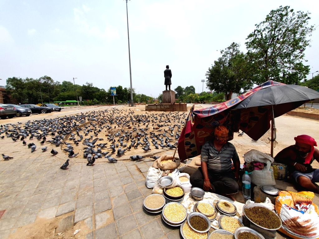 Hungry animals in the Corona epidemic - people becoming the support of birds
