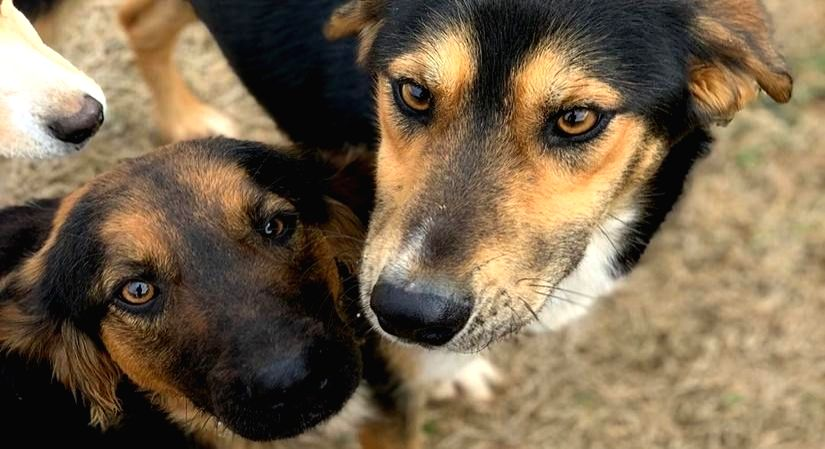Hyderabad, April 13 (IANS) Proving its faithfulness to man, a pet dog sacrificed its life to save its owner from a poisonous snake.