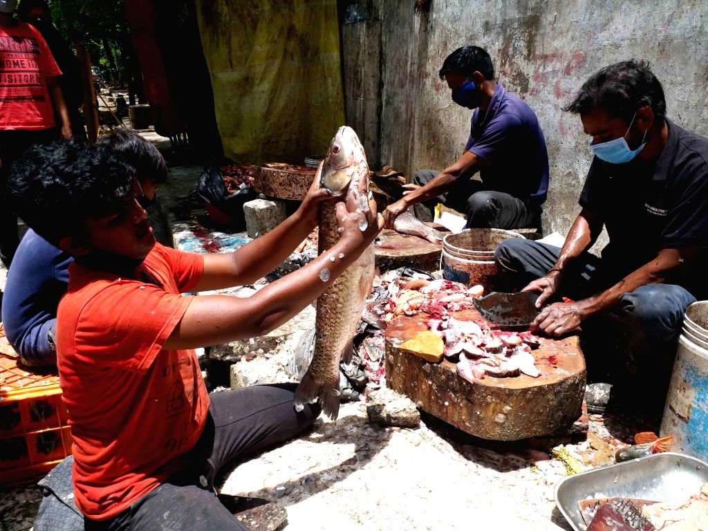 Hyderabad :  Huge demand for fishes  on the eve of Mrigasira Karthi at Hyderabad. cheapest  Fish meat  Rupees  1,75  per kg   Rohu  fishes   sale at Government  Fisheries Department at  Shanthinager  ...