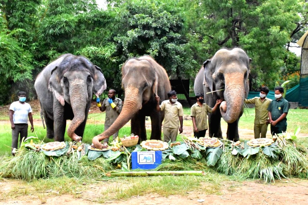Hyderabad Zoo.