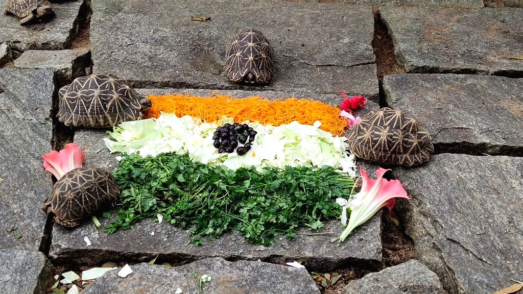 I-Day theme based food served to Bengaluru zoo animals.