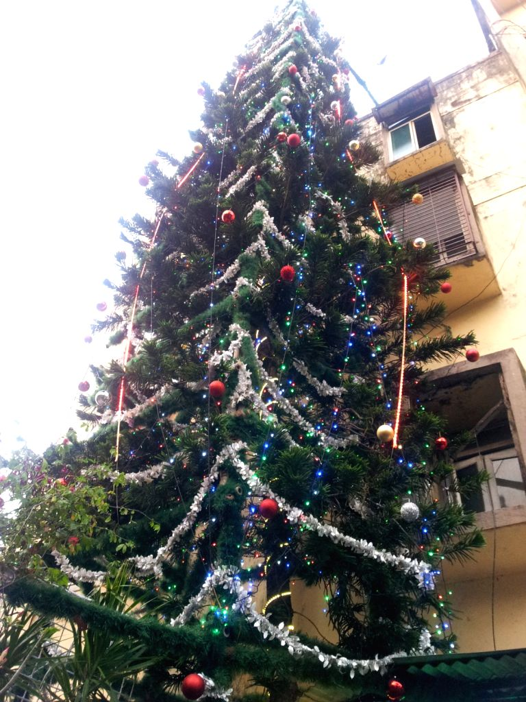 Christmas Tree In India.A Christmas Tree That Is India S Tallest And Growing