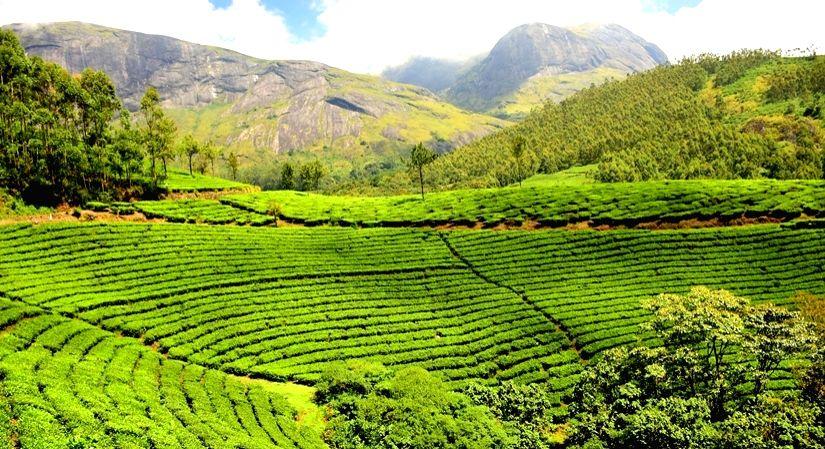 International Tea Day: How India's tea culture has evolved.