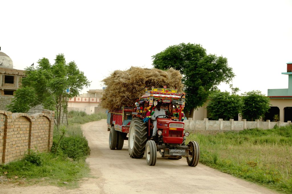 ISLAMABAD, May 2, 2019 - A farmer drives a tractor loaded with wheat crops on the outskirts of Islamabad, capital of Pakistan, May 1, 2019. Wheat harvest season has started as temperature rises in ...