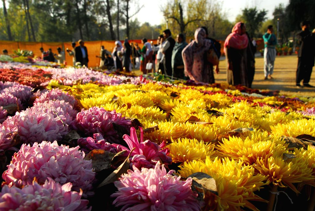 Islamabad (Pakistan):  People visit the Chrysanthemum and Autumn Flowers Show in Islamabad, capital of Pakistan, Dec. 6, 2014.