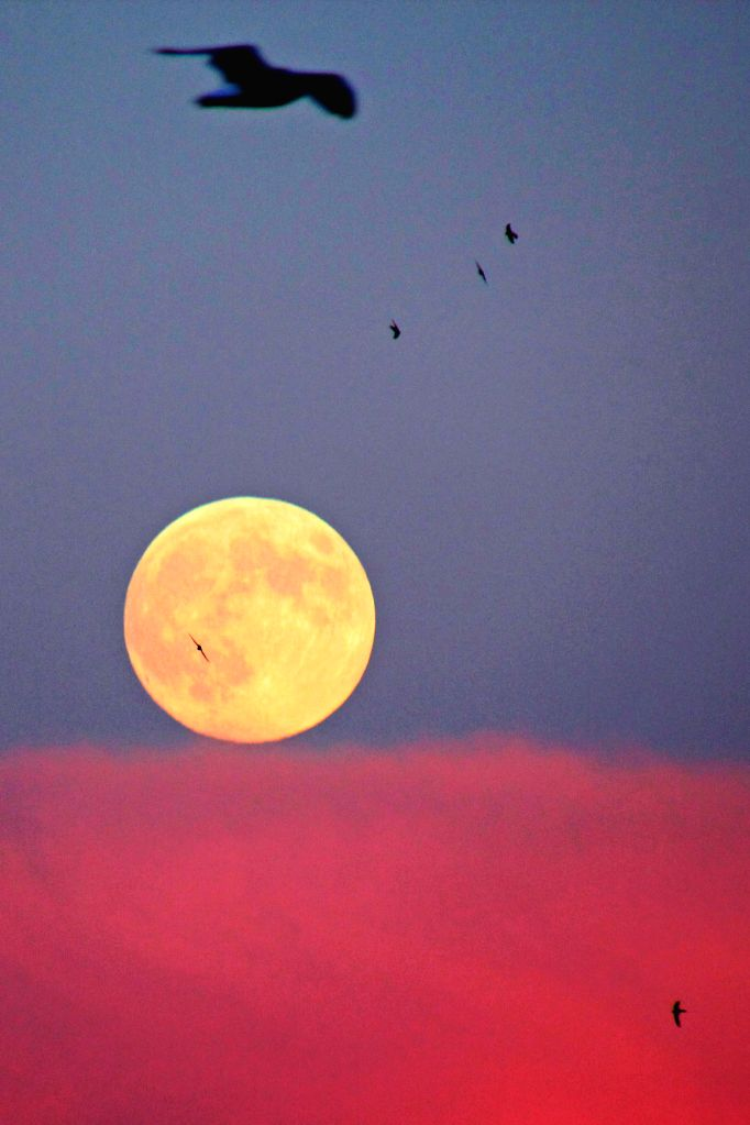 A full moon is seen in Istanbul, Turkey, at the Mid-Autumn Festival on Sep. 8, 2014. The Mid-Autumn Festival, which falls on Sept. 8 this year, is a traditional ...