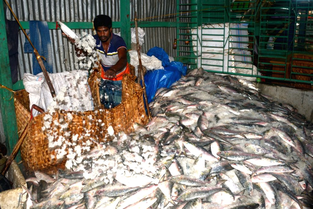 It's been nearly a month into the nationwide lockout and the otherwise money-spinning seafood exports industry in Kerala has been left high and dry, an industry person said on Tuesday. (Xinhua/IANS)