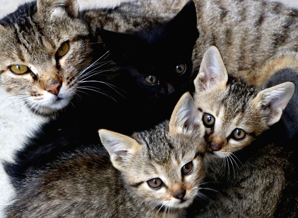 It's not just dogs, but cats can be your furry friends too. If you got one, understand how to maintain their nutritional requirements to ensure a healthy lifestyle for cats, say experts. (File Photo: IANS)