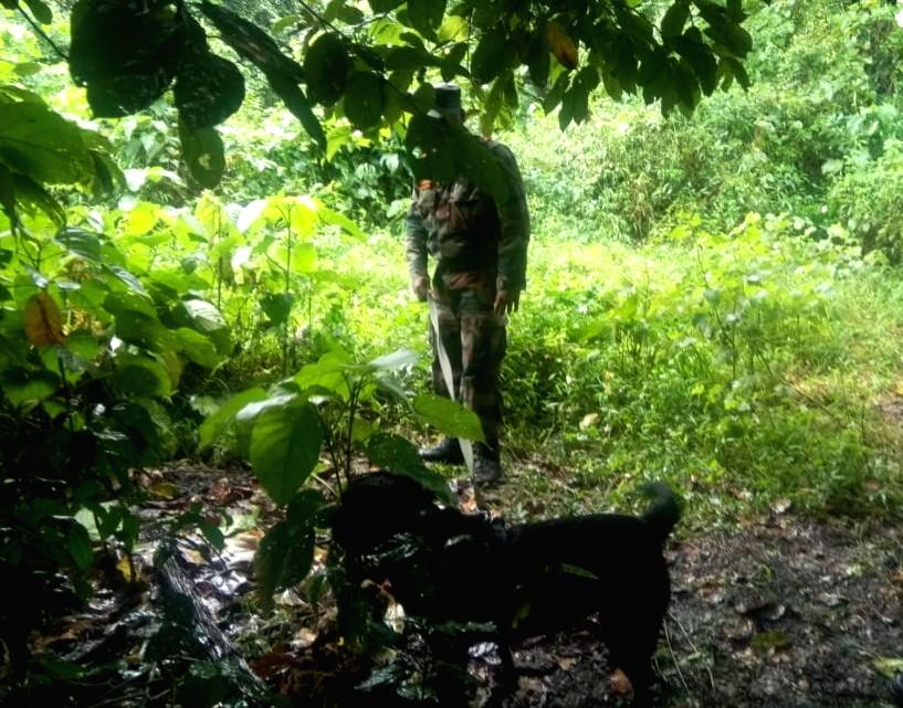 Jaari, a three-year-old female black Labrador who staved off a possible terror attack in Assam by helping security forces discover a huge cache of arms and ammunition in Panbari Forest Reserve. As ...