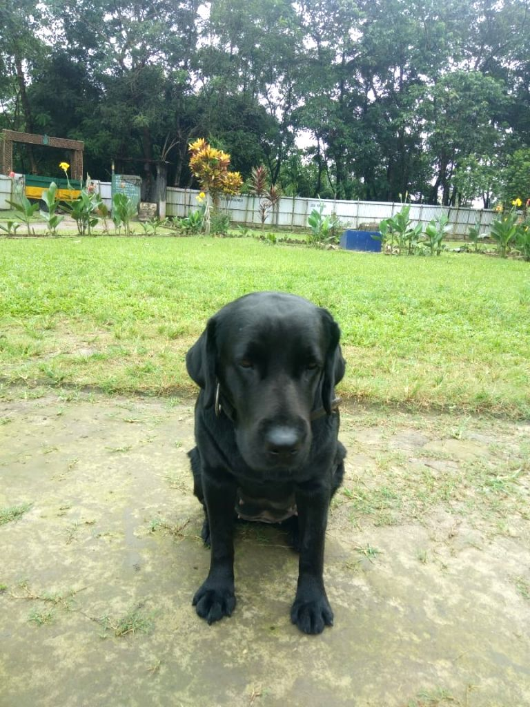 Jaari, a three-year-old female black Labrador who staved off a possible terror attack in Assam by helping security forces discover a huge cache of arms and ammunition in Panbari Forest Reserve. As per officials, the cache of weapons had been buried u