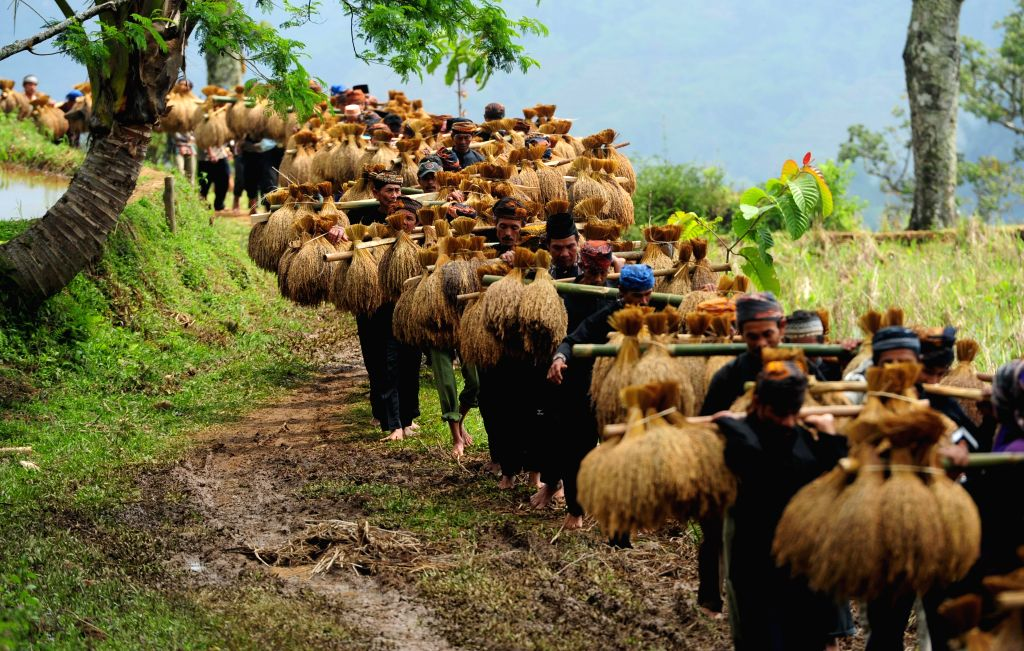 """Villagers carry unhusked rice during the traditional """"Seren Taun"""" harvest festival at Ciptagelar Village in Sukabumi of West Java province, Indonesia, ..."""