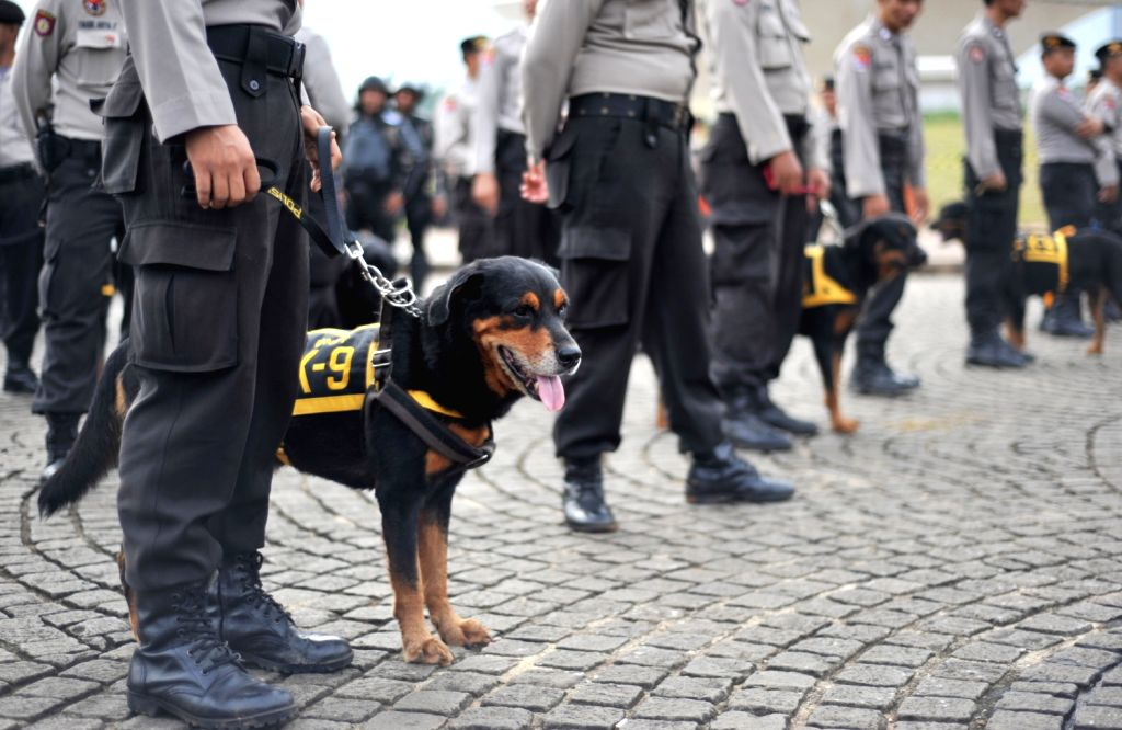 """Indonesian police dog squad participate in """"Operasi Lilin 2013"""" (Candle Light Operation 2013) ahead of the Christmas and New Year celebrations in ..."""