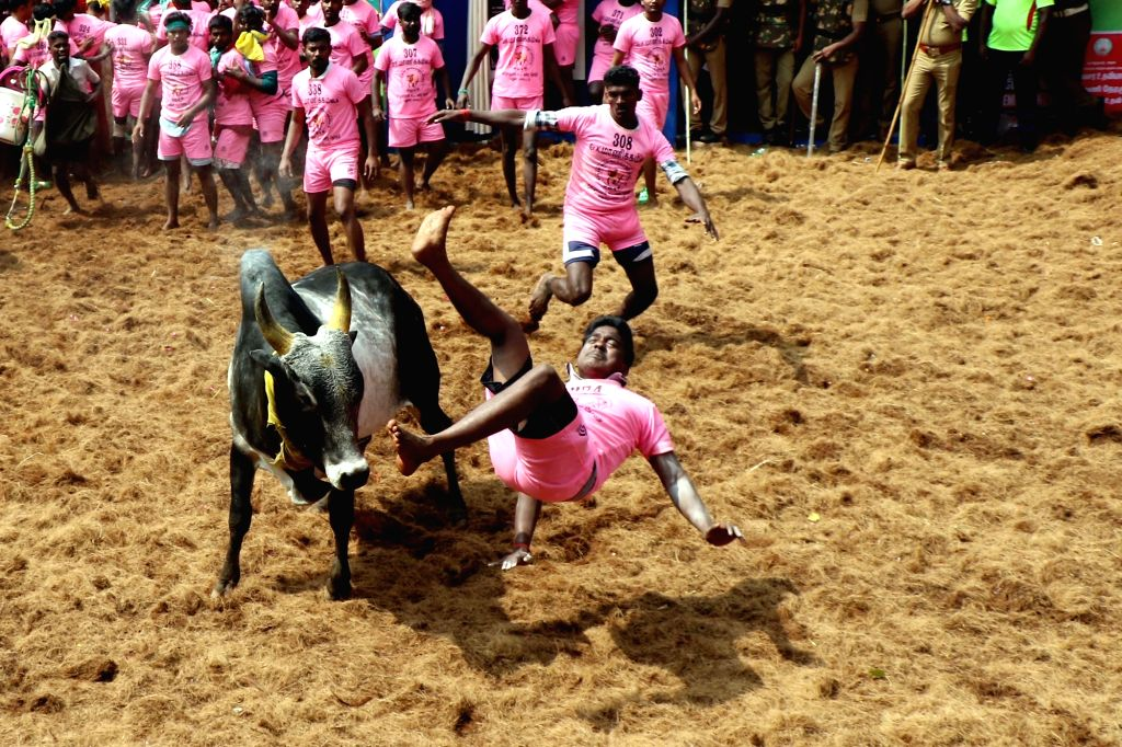 Jallikattu. (File Photo: IANS)