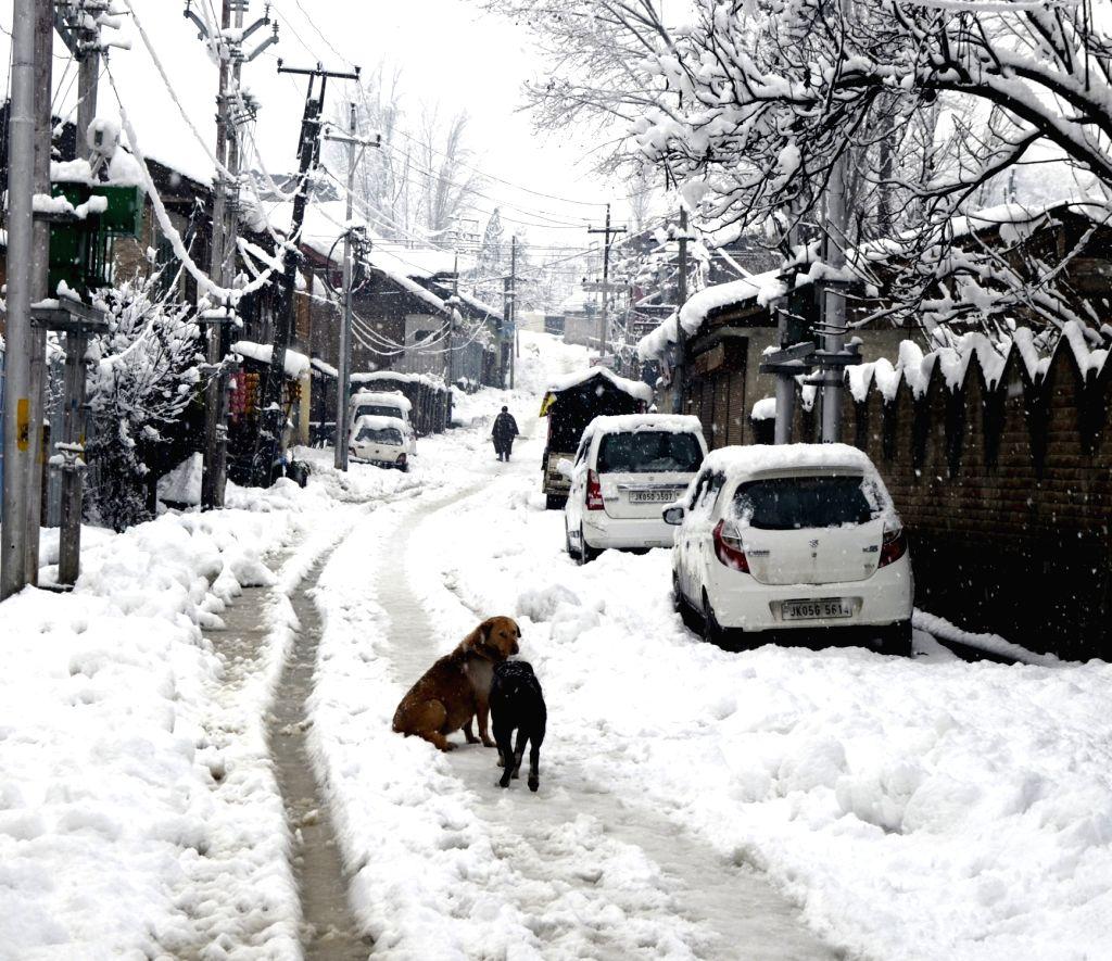 Jammu and Kashmir's Baramulla receives fresh snowfall, on Feb 7, 2019.