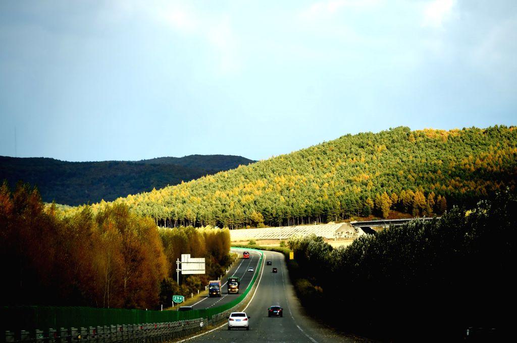 JIAMUSI, Oct. 10, 2016 - Photo taken on Oct. 9, 2016 shows autumn scenery along the Hatong Highway linking Harbin and Tongjiang cities in northeast China's Heilongjiang Province.