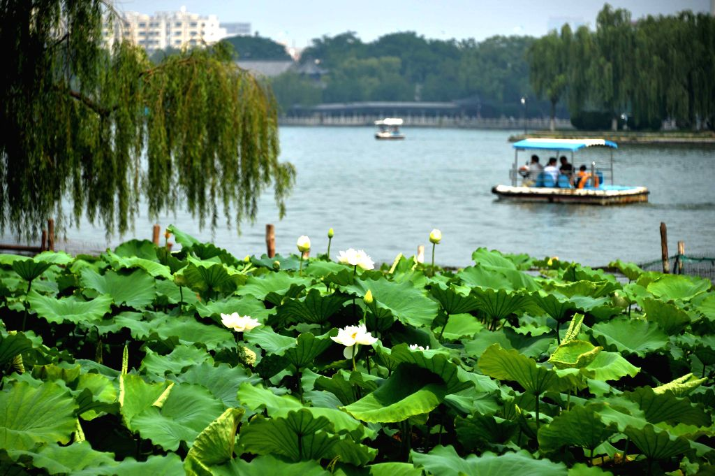 JINAN, July 2, 2016 - Tourists on a sightseeing boat view lotus flowers in Daming Lake in Jinan, capital of east China's Shandong Province, July 2, 2016.