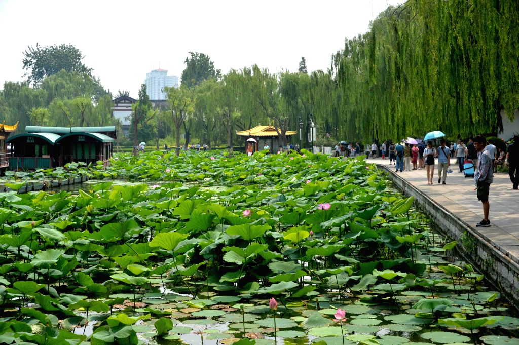 JINAN, July 2, 2016 - Tourists view lotus flowers in Daming Lake in Jinan, capital of east China's Shandong Province, July 2, 2016.