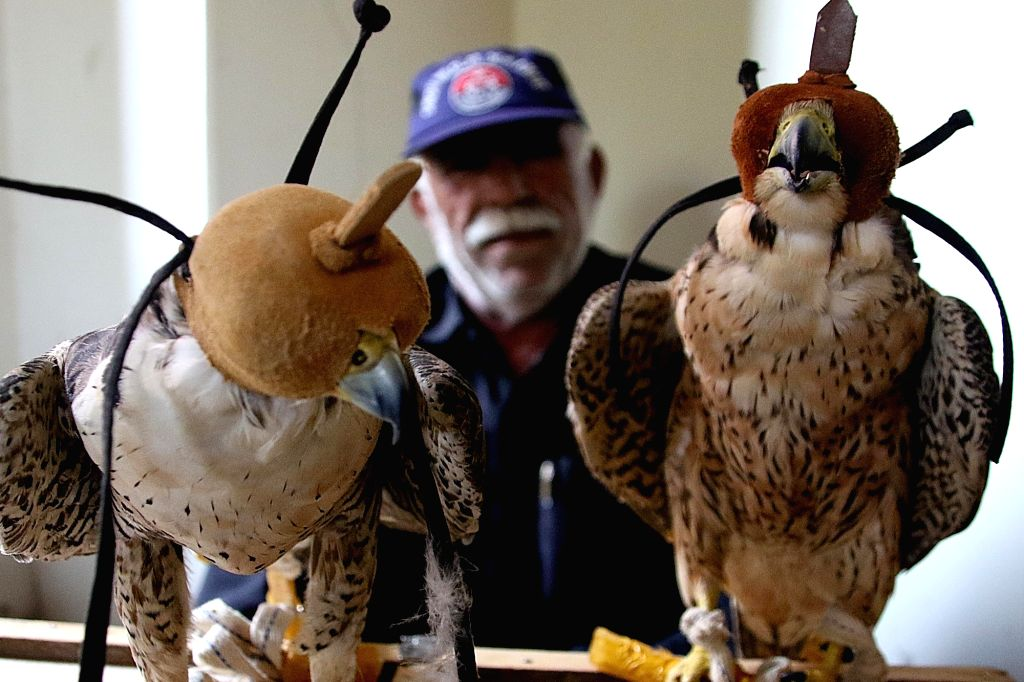 KARACHI, Oct. 11, 2017 - Seized falcons are seen in southern Pakistani port city of Karachi on Oct. 11, 2017. Pakistan's southern Sindh province Wildlife Department seized eight precious falcons and ...