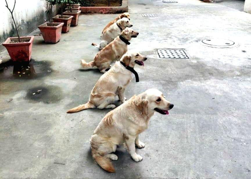 Karnataka Police to induct 50 dogs at Rs 2.5 crore (Photo: IANS)