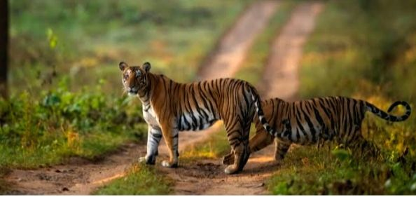 Karntaka BJP MP wants  Rajiv Gandhi Nagarhole National Park & Tiger Reserve to be renamed after first Indian Commander-in-Chief of Indian Army.