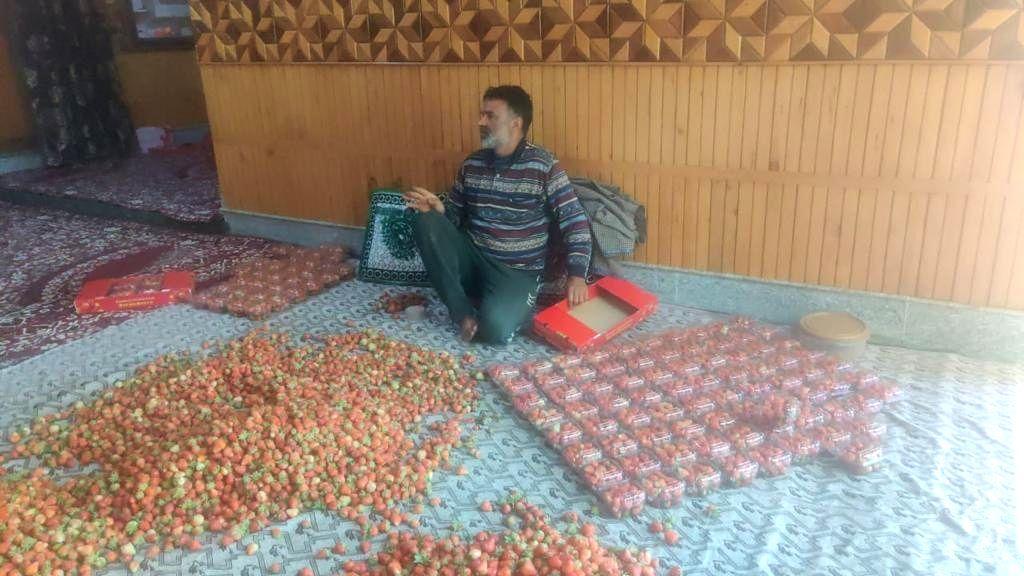 Kashmir strawberry farmers losing out due lockdown.