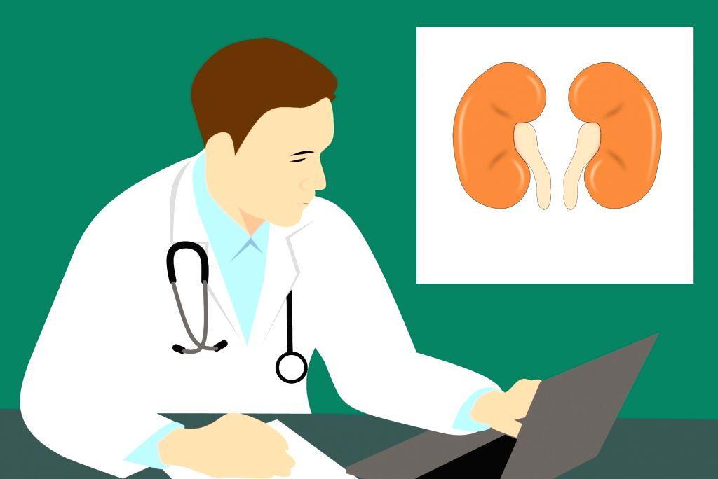 Kidney.