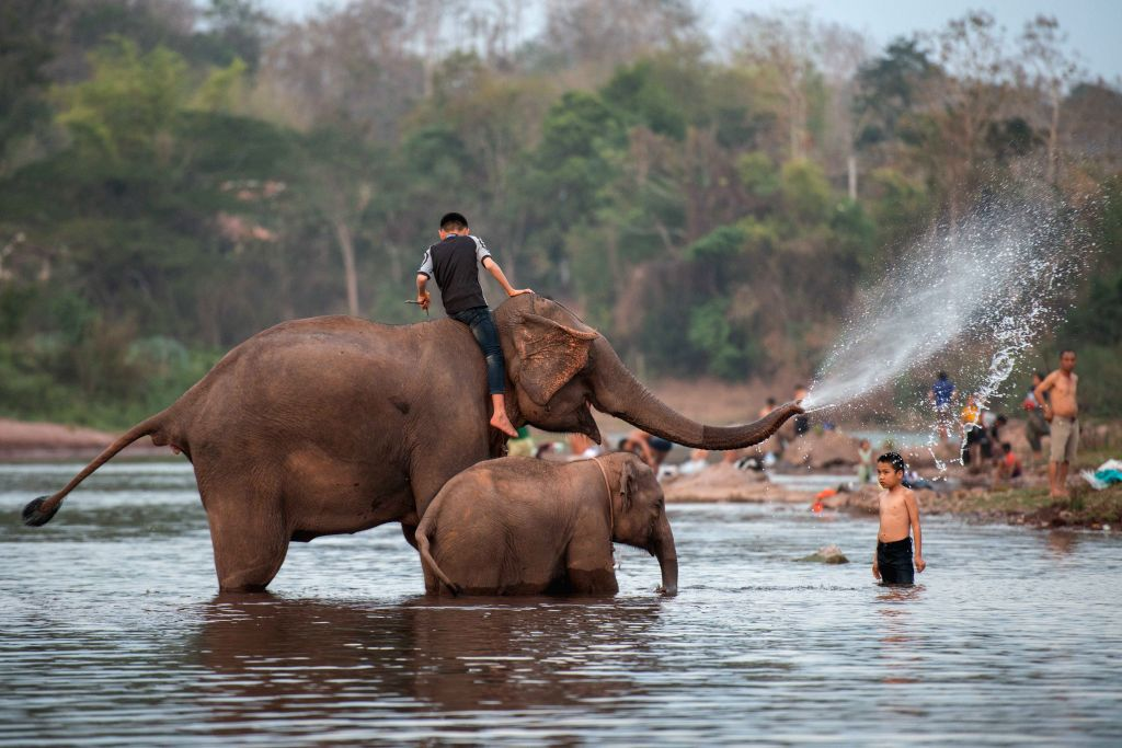 Kids play with elephants during the Elephant Festival in a tributary of Mekong River in northern Lao province of Xayaboury, on Feb. 22, 2020. The annual Elephant ...