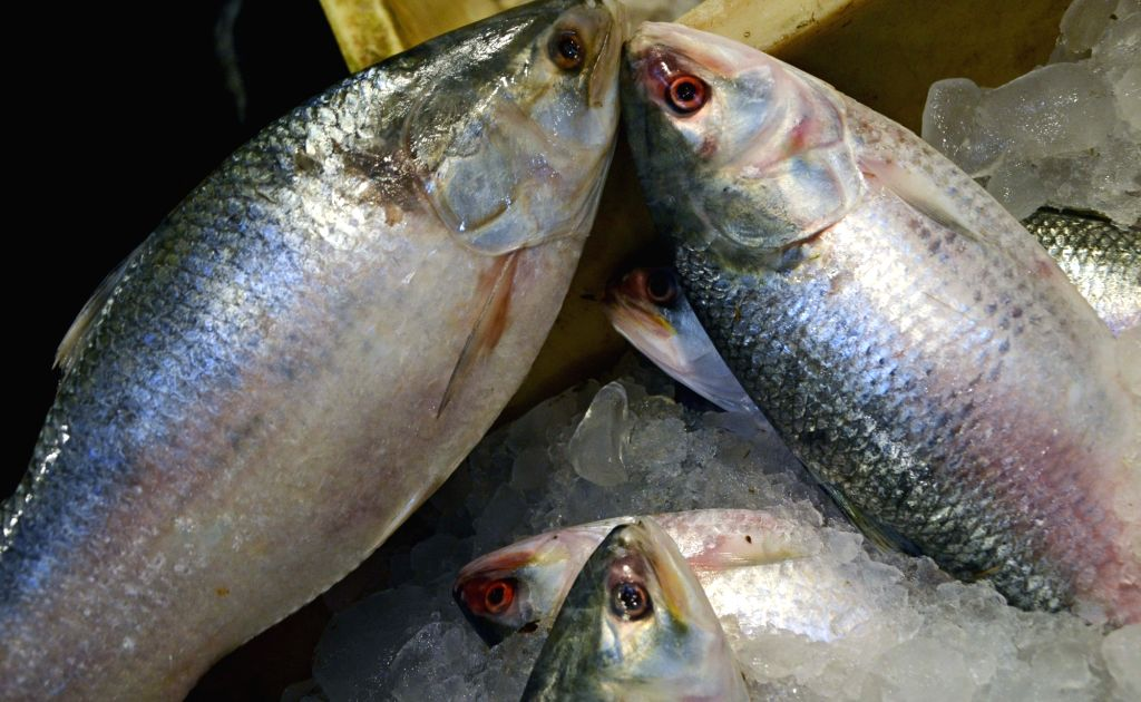 Kolkata: Good news for Bengal food lovers. A huge consignment of their favourite silvery delight 'Hilsa' arrived in Kolkata's adjoining Howrah wholesale fish market from neighbouring Bangladesh., on Sep 15, 2020. The Sheikh Hasina government temporar - The Sheikh Hasina