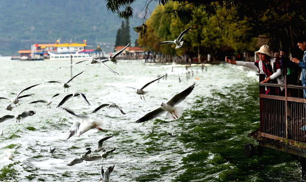 KUNMING, Oct. 25, 2016 - Visitors feed the black-headed gulls at the Dianchi Lake in Haigeng park in Kunming, capital of southwest China's Yunnan Province, Oct. 25, 2016. More than 1000 black-headed ...