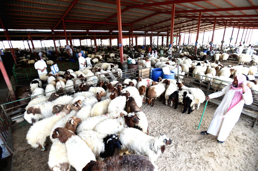 KUWAIT CITY, Aug. 3, 2019 - People buy sheep at a market in Al-Jahra Governorate, Kuwait, on Aug. 3, 2019. Kuwaitis prepare to celebrate Eid al-Adha, one of the most important festivals for Muslims, ...