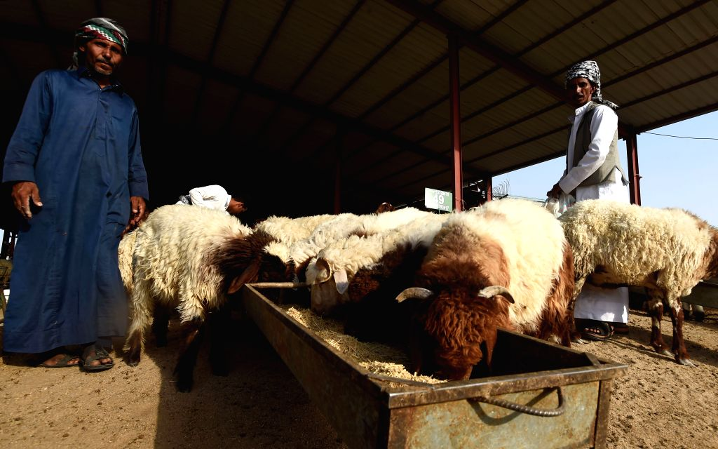 KUWAIT CITY, Aug. 3, 2019 - Sellers feed their sheep at a market in Al-Jahra Governorate, Kuwait, on Aug. 3, 2019. Kuwaitis prepare to celebrate Eid al-Adha, one of the most important festivals for ...