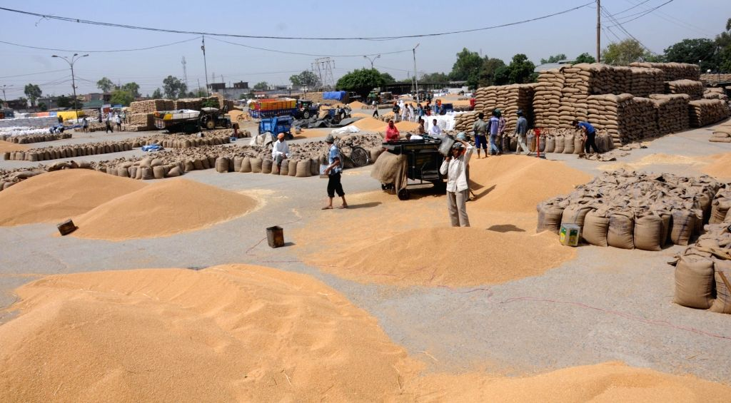 Labourers arranging wheat bags at a grain market of Amritsar on April 21, 2016.