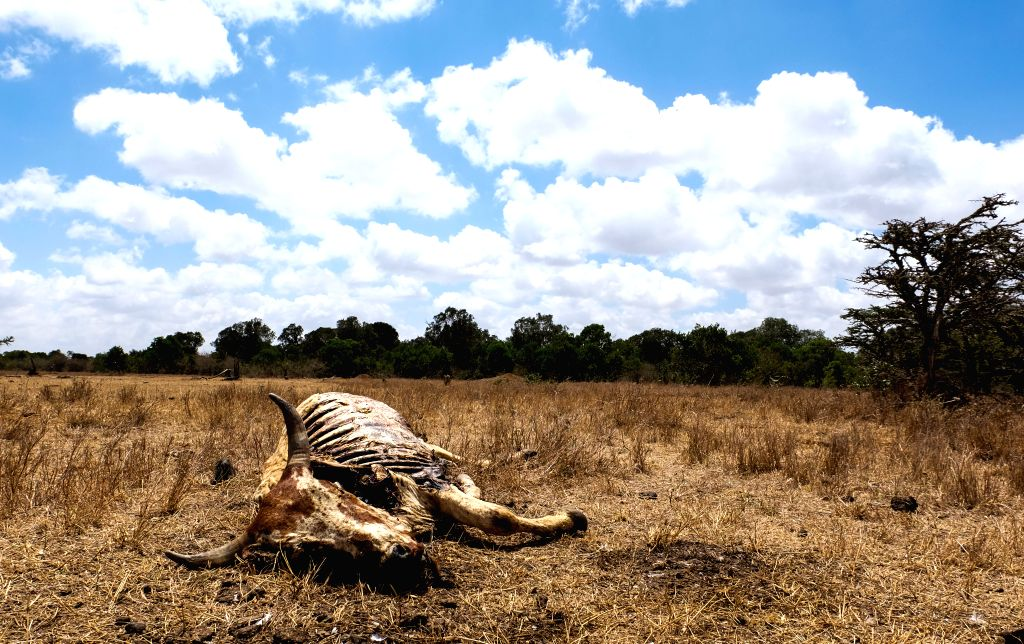 LAIKIPIA (KENYA), March 1, 2017 Photo taken on March 1, 2017, shows the carcass of a bull in Laikipia County, Kenya. The UN Food and Agriculture Organization (FAO) has warned that Kenya ...