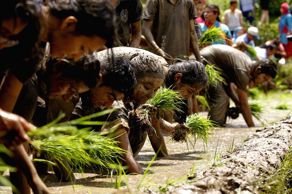 """LALITPUR, June 30, 2016 - People transplant rice seedlings during the Asar Pandhra festival in Lalitpur, Nepal, June 29, 2016. The festival, which falls on """"Asar 15"""" of the Nepalese ..."""