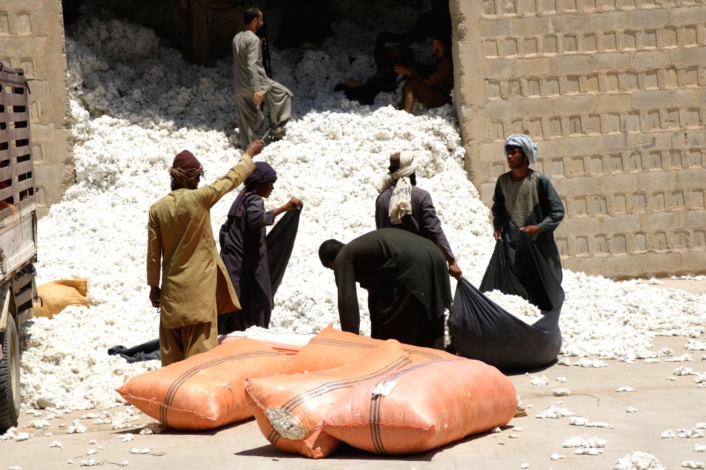 LASHKAR GAH (AFGHANISTAN), July 14, 2020 Afghan men work at a cotton-processing factory in Lashkar Gah, capital of Helmand province, southern Afghanistan, July 13, 2020. The ...