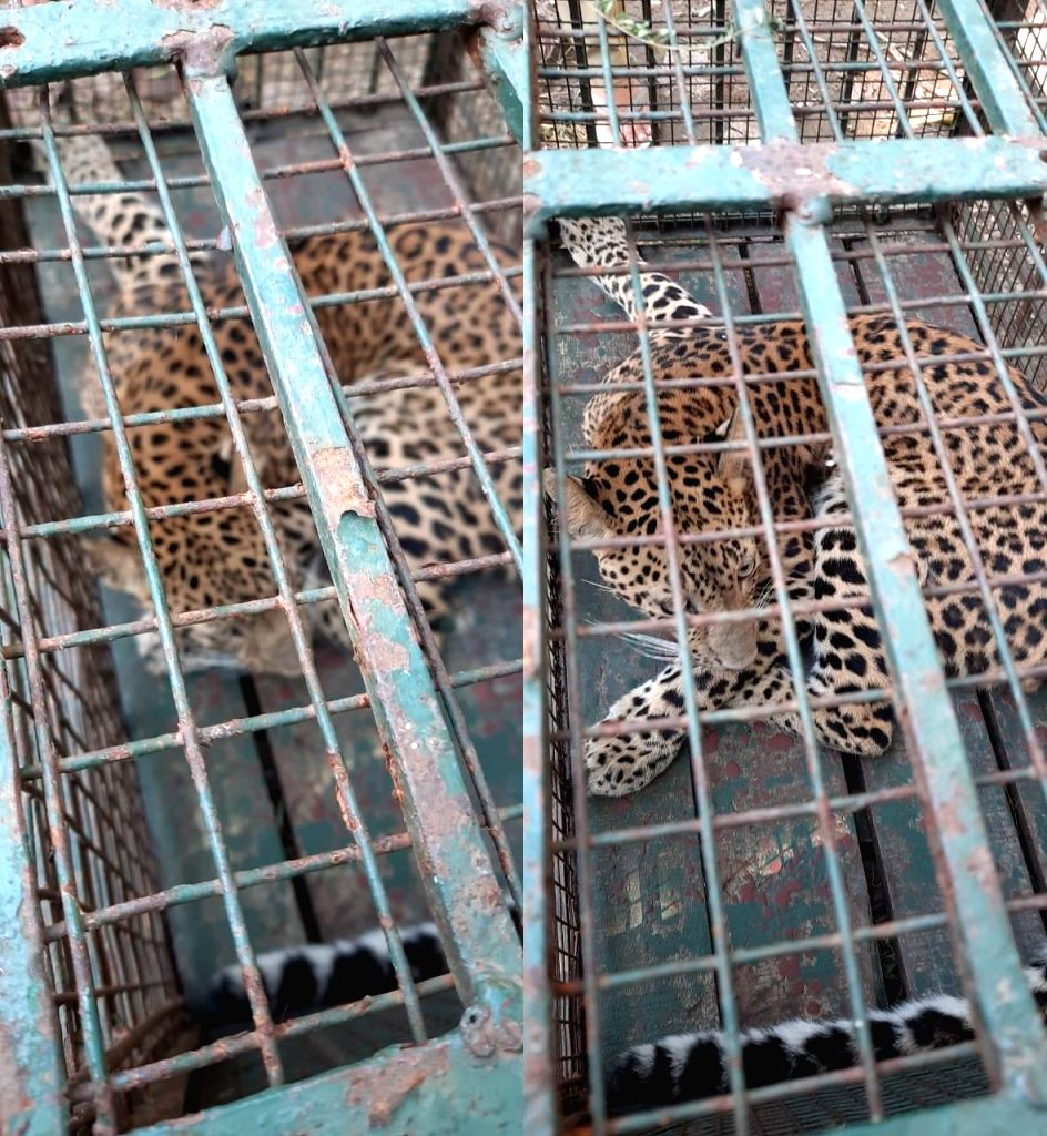 Leopard strays into girls' hostel in Guwahati, rescued.