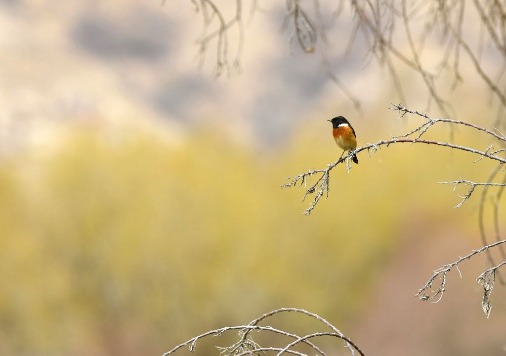 LHASA, April 8, 2019 - A bird is seen at Lhalu wetland in Lhasa, southwest China's Tibet Autonomous Region, on April 7, 2019. Lhalu wetland national nature reserve, with an altitude of 3,645 meters, ...