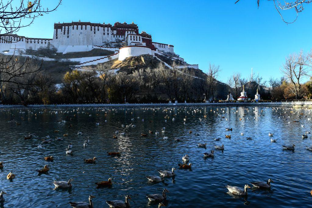 LHASA, Dec. 4, 2017 - Photo taken on Dec. 1, 2017 shows the Zongjiaolukang Park in Lhasa, capital of southwest China's Tibet Autonomous Region. (Xinhua/Purbu Zhaxi)