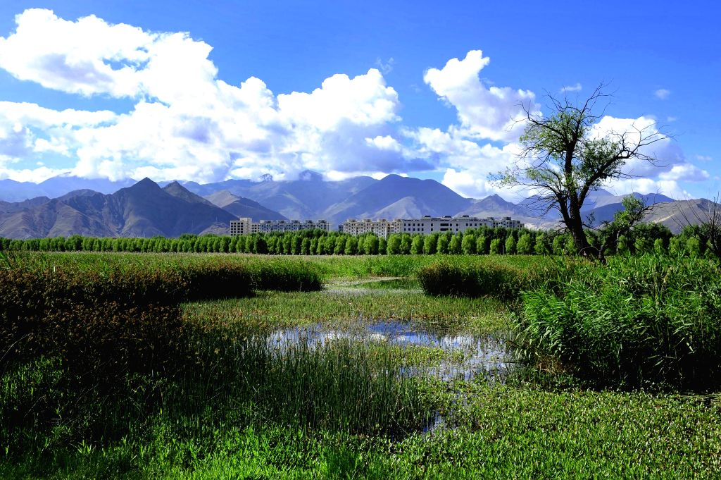 Photo taken on June 26, 2014 shows the scenery of Lhalu wetland on the northwest outskirts of Lhasa, capital of southwest China's Tibet Autonomous Region. Lhalu ...