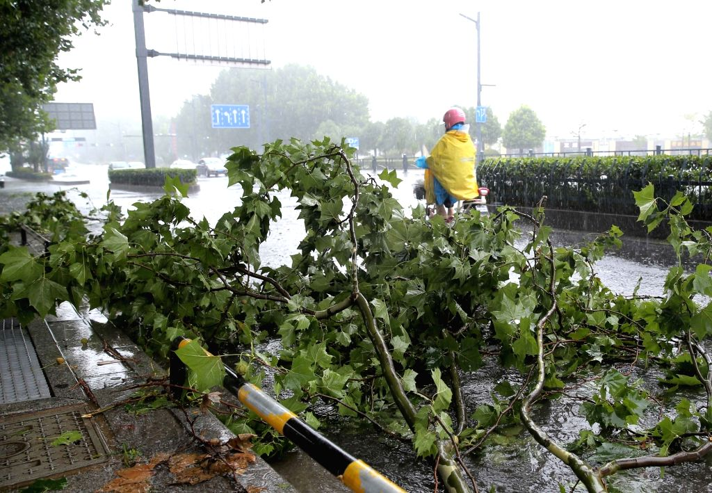 LIANYUNGANG, July 23, 2018 - A man rides past a tree blown down by wind in Lianyungang City, east China's Jiangsu Province, July 23, 2018. Ampil, this year's 10th typhoon, brought heavy rain to ...