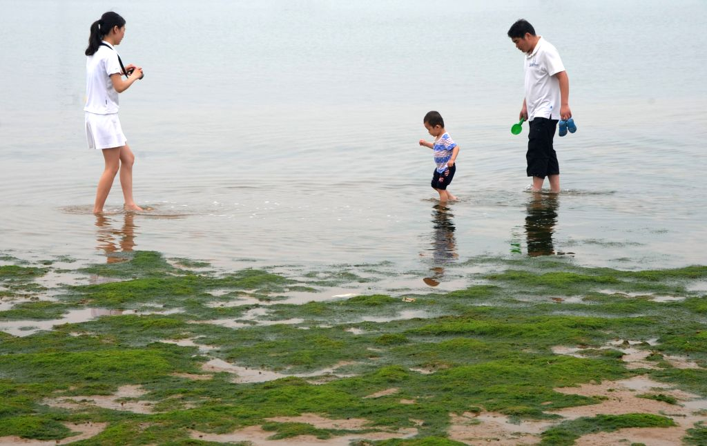 People play ashore as the seashore is occupied by green algae at a beach park in Lianyungang, southeast China's Jiangsu province, June 15, 2014. Green algae has